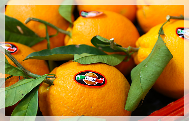arance-tarocco-home