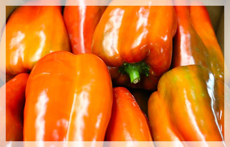 peperone-clovis-rosso-home